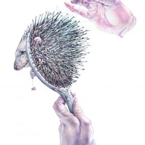 Hedgehog Brush-illustration-and-caricature-